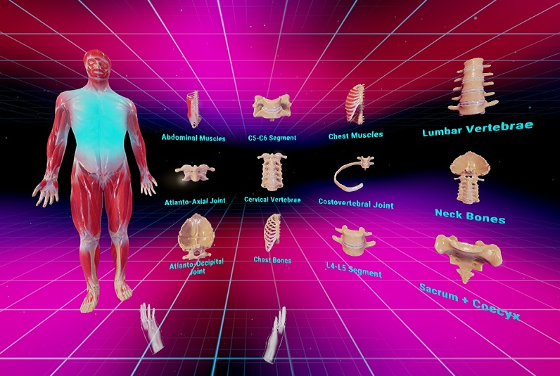Vr Human Anatomy A Powerful Educational Tool To Learn Anatomy In